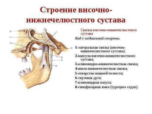 Строение височно-нижнечелюстного сустава